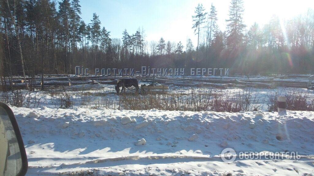 Родину беречь: появились фото циничной вырубки леса в Украине