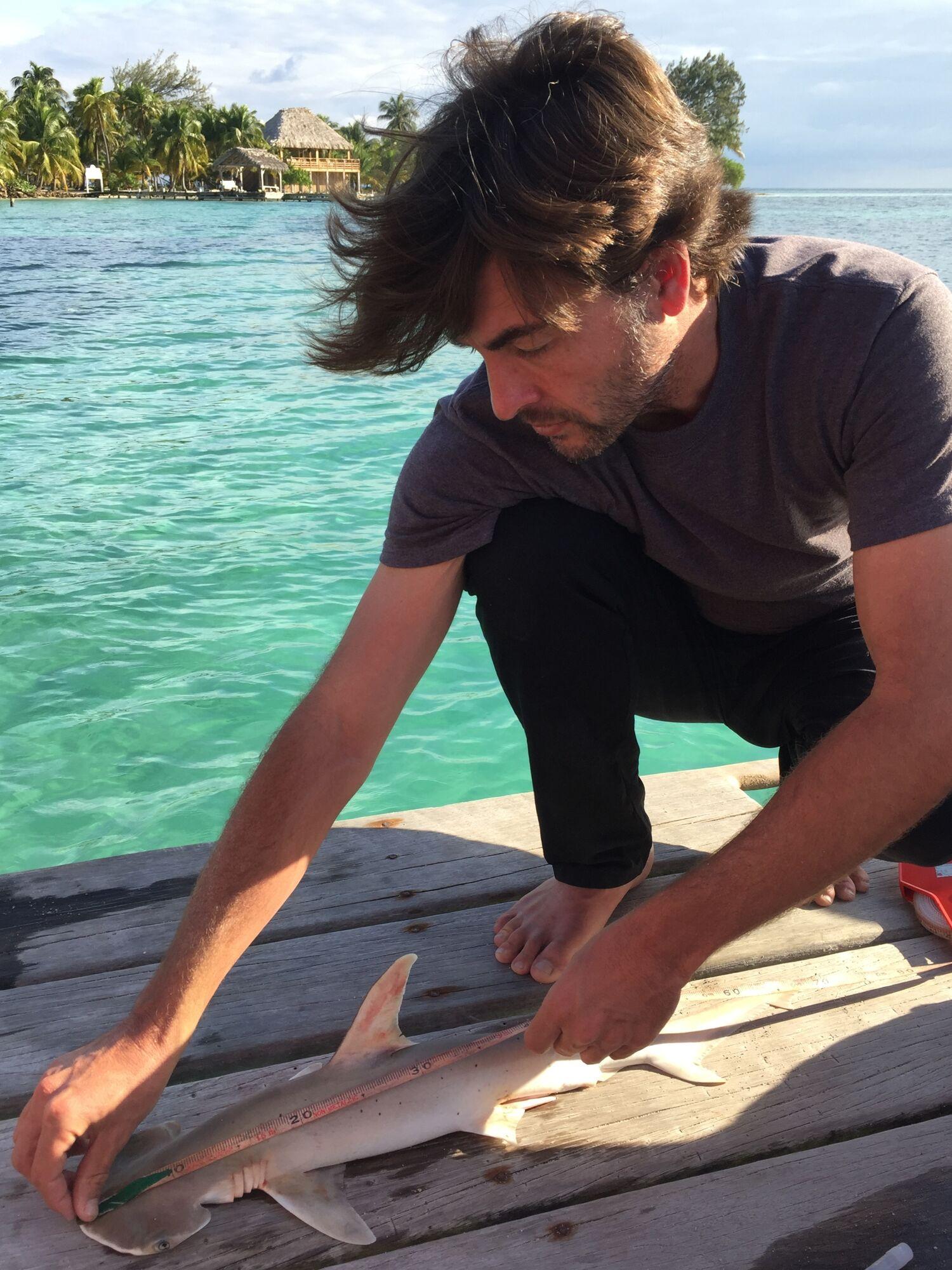 В Карибском море обнаружен новый вид акулы: опубликованы фото