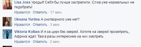 """""""Себя лучше застрелите"""": соцсети возмутило убийство цирковой львицы на Черниговщине"""