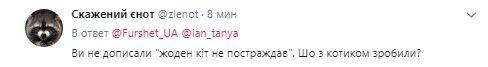 """""""Віддамо в хороші руки"""": у Києві супермаркет вирішив позбутися скандальної кішки"""