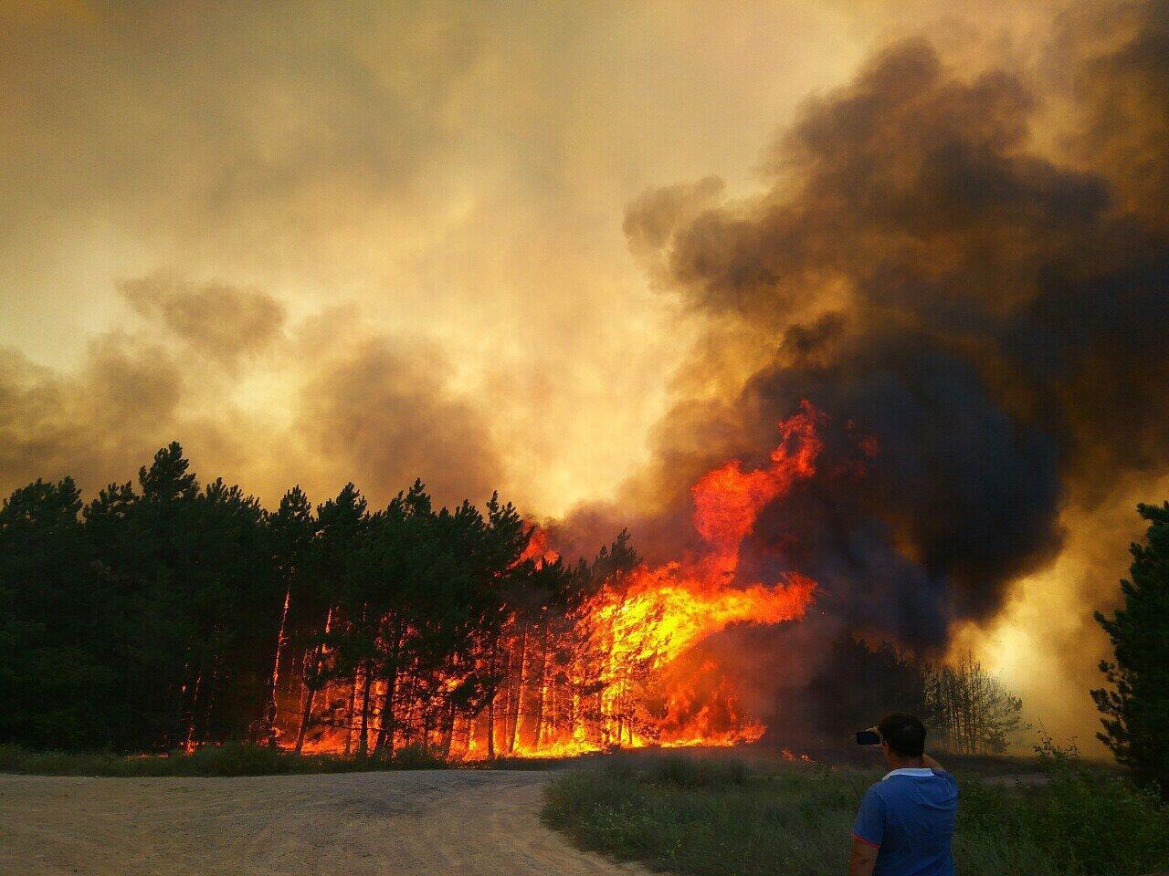 Вигоріло 80 га лісу: стало відомо про жахливу НС у Миколаївській області