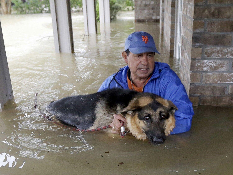 Джо Гарсія несе свою вівчарку Хайді із затопленого будинку