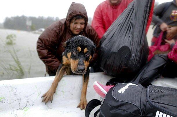 Пес, який намок до нитки, залазить на човен