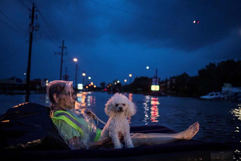 Жінка та її пудель на надувному матрвсі чекають на рятівників