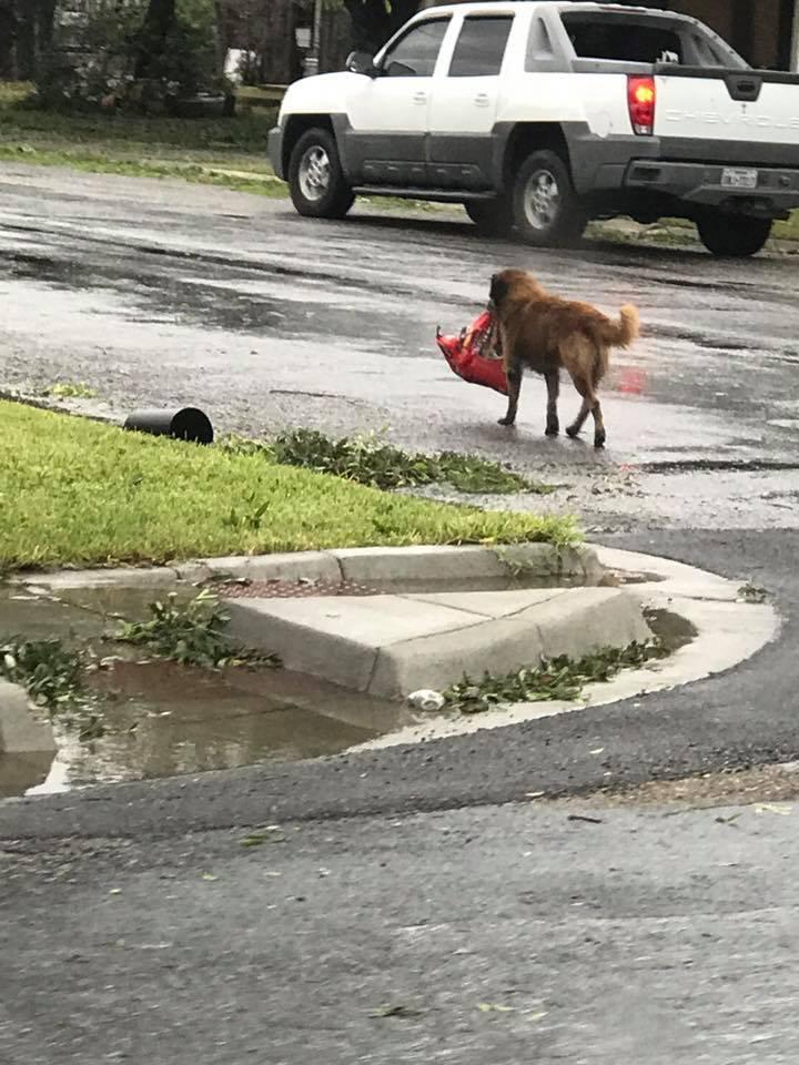 """Подвиг заради домашніх вихованців: як американці рятують тварин від урагану """"Харві"""""""