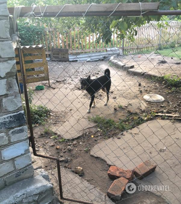 """Крупнейший ботсад Украины засветился в скандале с животными-""""нелегалами"""""""