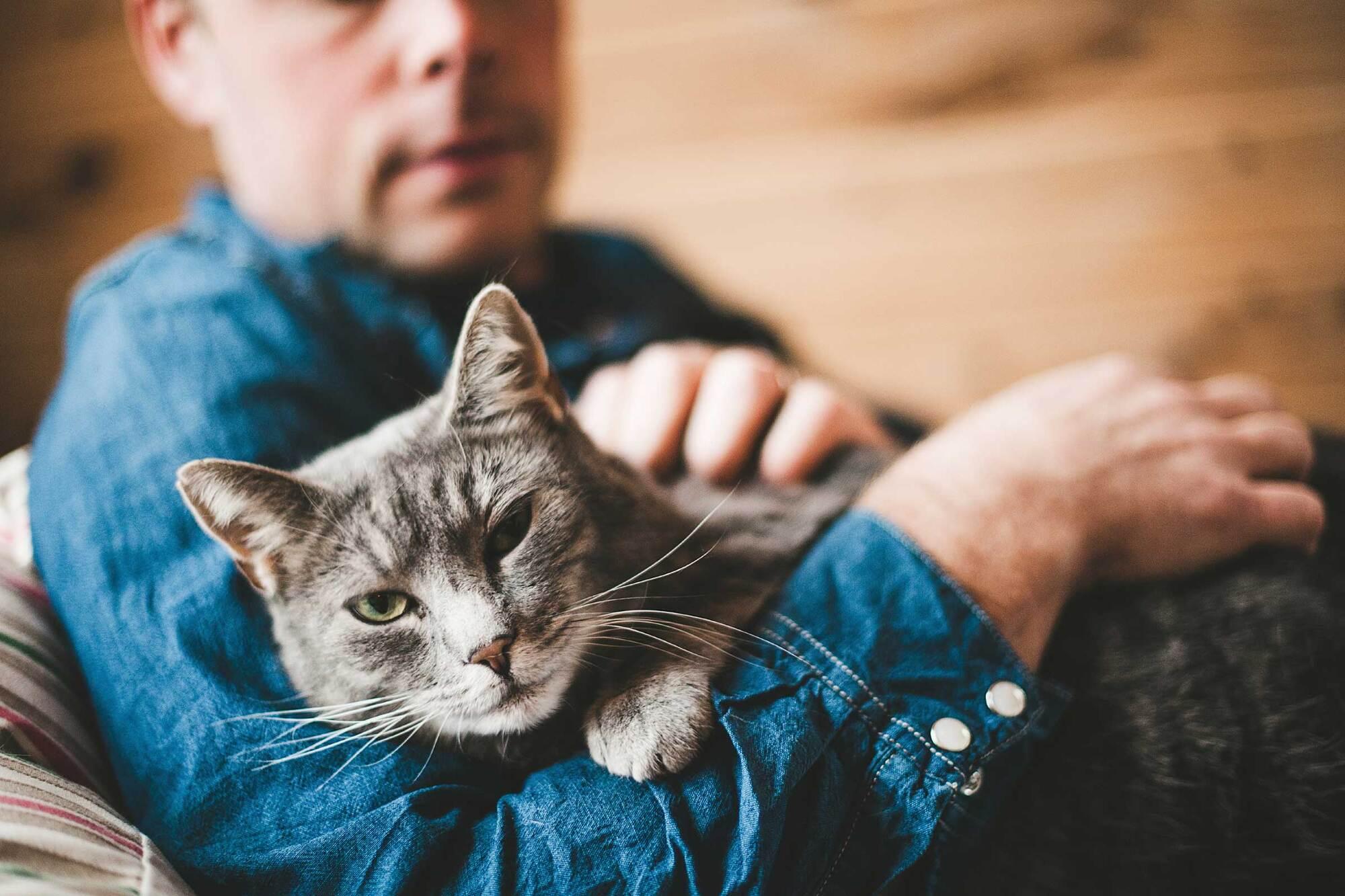 День кішок: як вони прийшли до людей, чому їх так люблять, і що не так з огірками