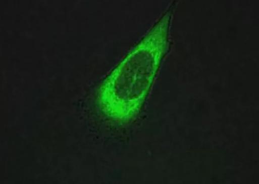 Ученые тестируют моторизованные молекулы для разрушения раковых клеток