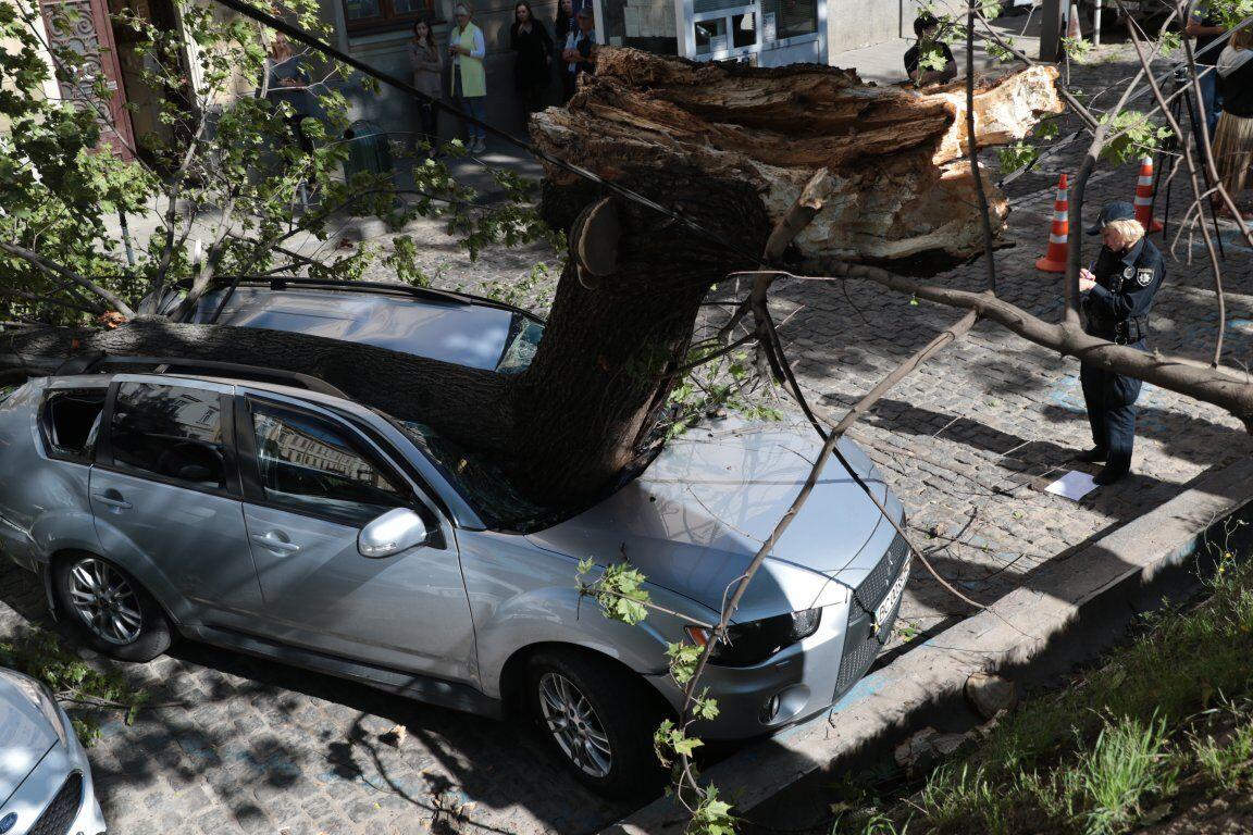 Вцентрі Львова дерево розтрощило авто нардепа