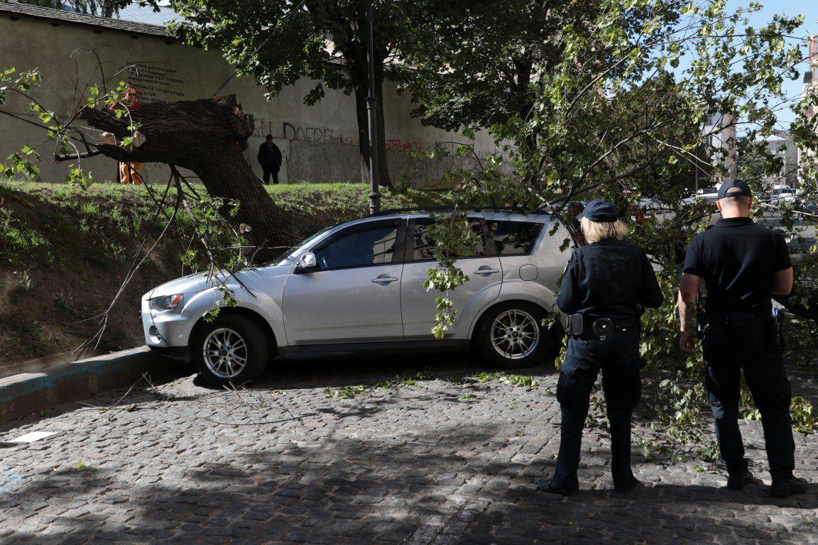 Вдребезги: во Львове дерево упало на авто нардепа