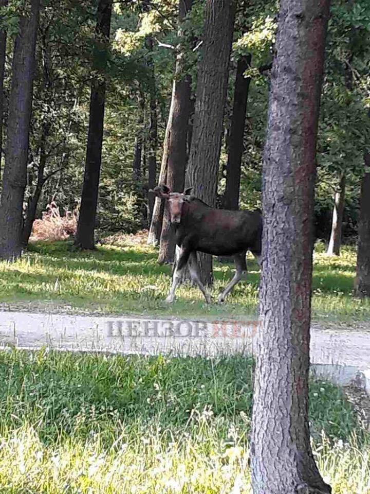 Взрывы в Калиновке: виноваты лоси?