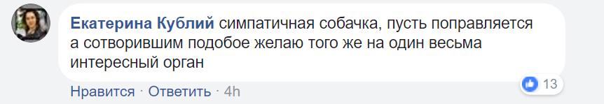 """""""Отметил год Собаки"""": киевский живодер шокировал сеть жестоким поступком"""