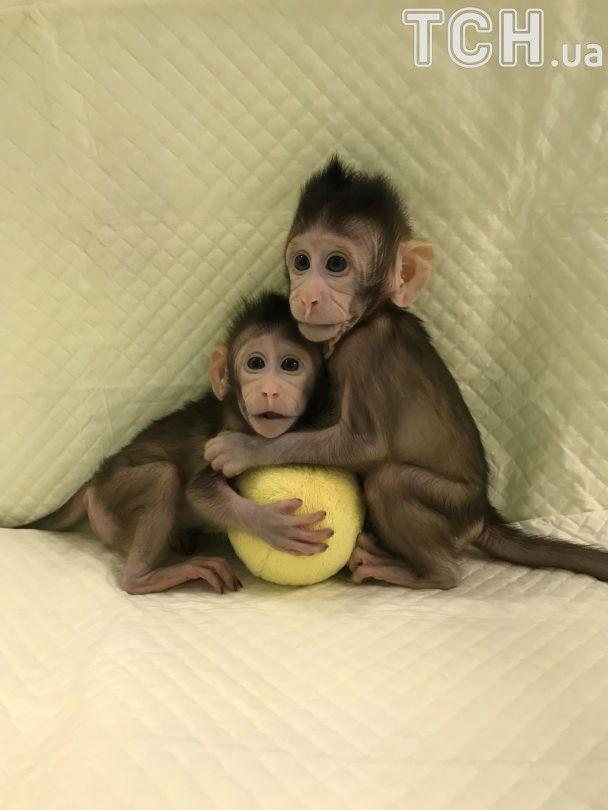 Следующим будет человек? В Китае впервые в мире клонировали обезьян