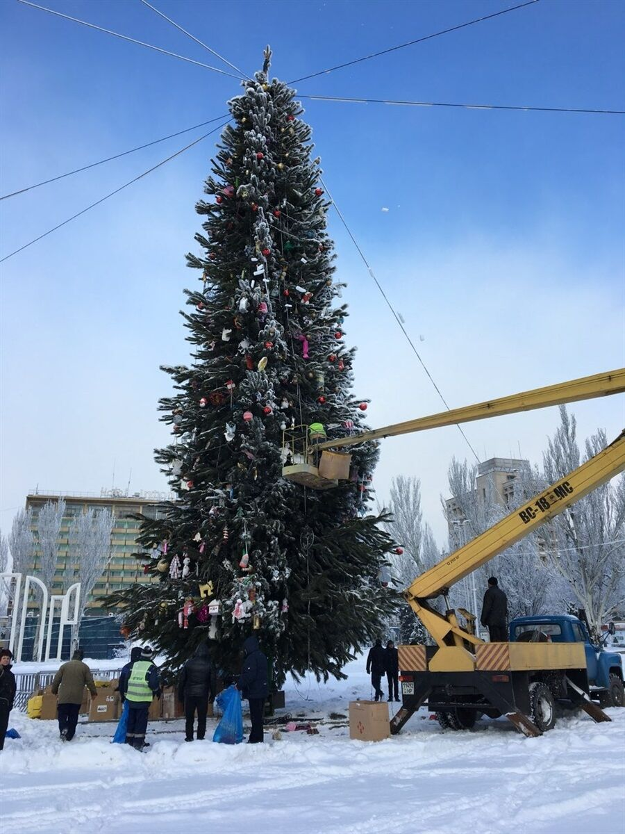 В Запорожье центральную елку области отдадут на корт животных