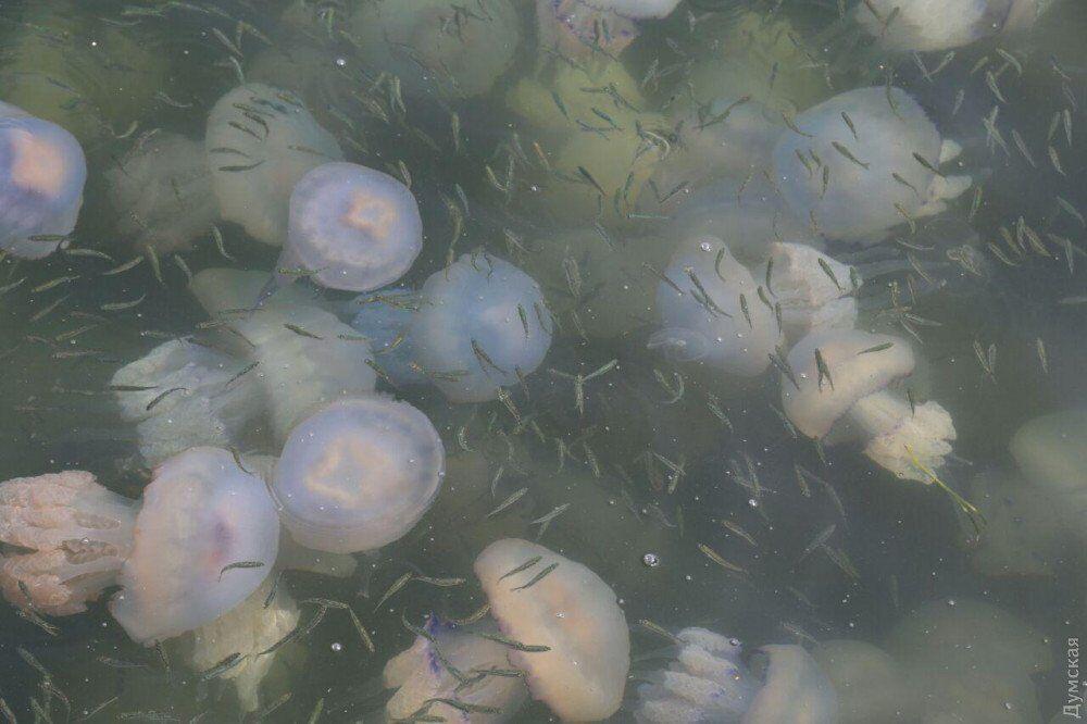 В Одессе заметили нашествие медуз: пугающие фото