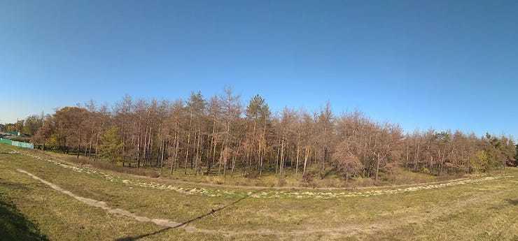 У Києві отруїли більше 400 дерев: подробиці інциденту