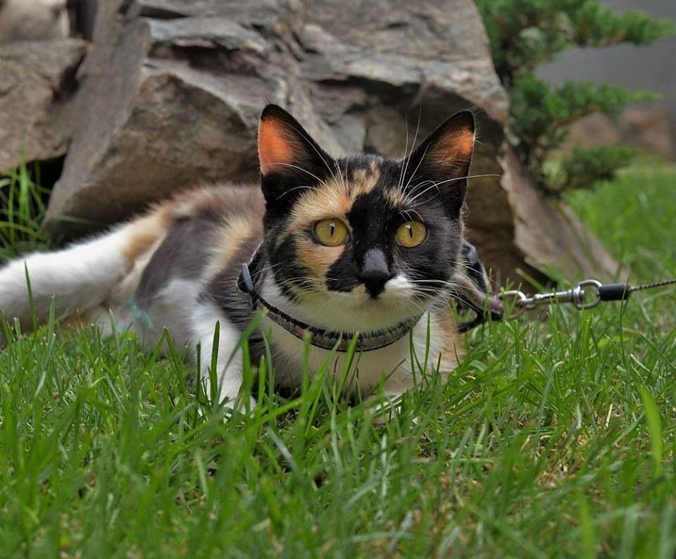 Кошка Эля