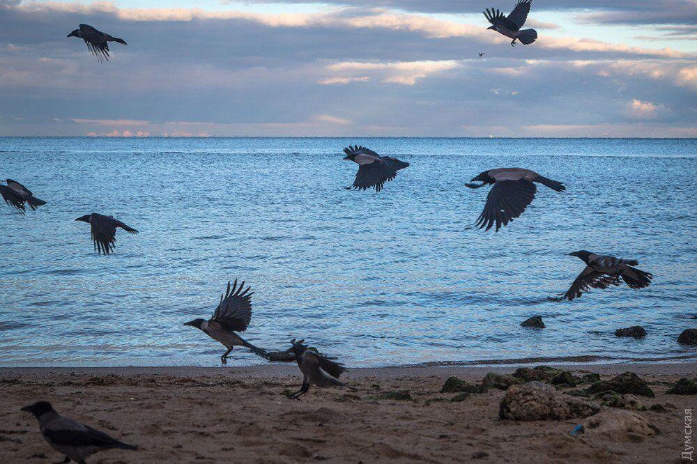В Одессе заметили необычное природное явление: впечатляющие фото