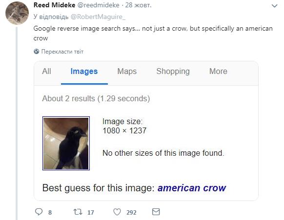 Нова оптична ілюзія із котом підкорила мережу