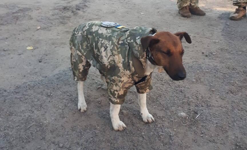 Воины на Донбассе сшили форму фронтовому песику: милое фото