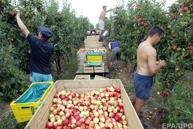 Украинцы помогают полякам в сборе урожая
