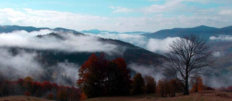 Окутаны туманом: в сети опубликовали красочные фото Карпат