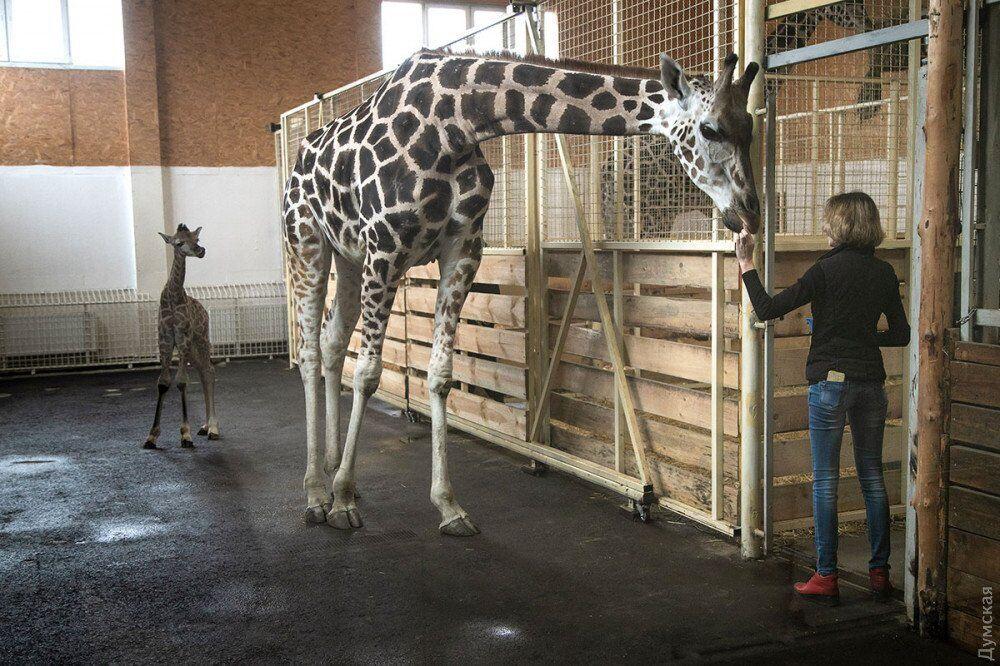 Другий в Україні: в одеському біопарку з'явилася рідкісна тварина