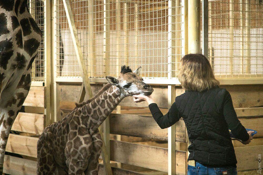 Второй в Украине: в одесском биопарке появилось редкое животное