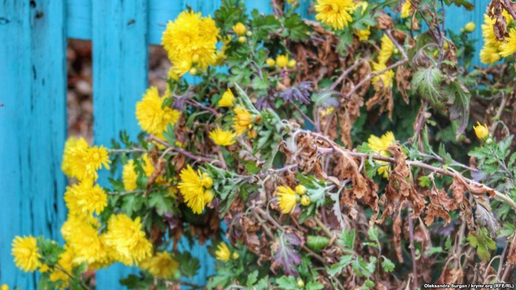 ''Смотреть страшно'': как выглядит Армянск после экокатастрофы. Фотофакт