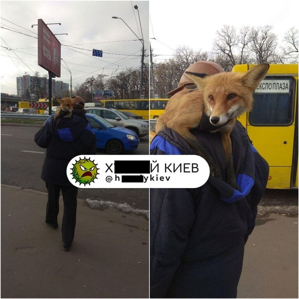 У Києві помітили чоловіка з незвичайною твариною на плечі