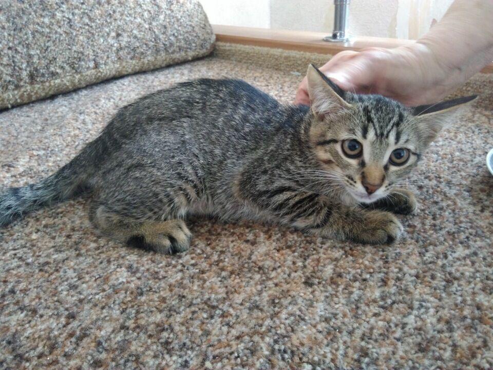 Котенок Маша