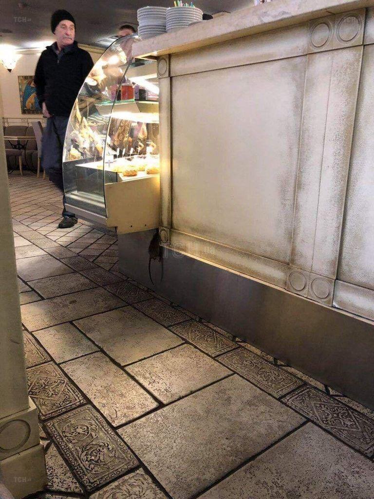 У Києві у пекарні відвідувачі знайшли повішеного пацюка