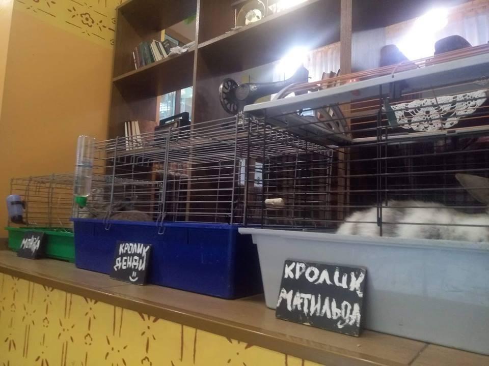 Популярное кафе в Киеве возмутило сеть жестоким обращением с животными