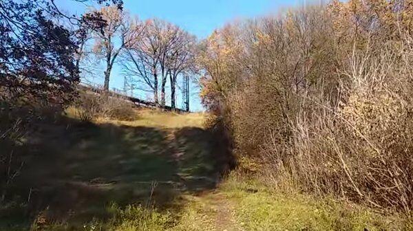 В этих кустах нашли тело Алисы