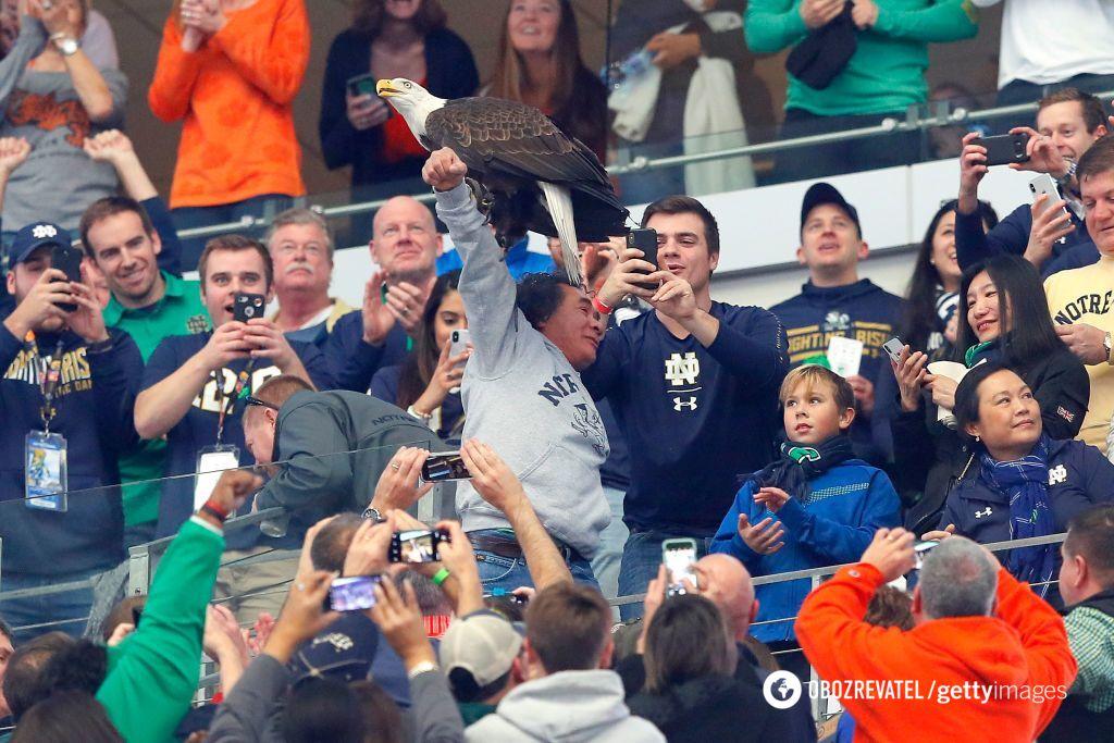 Орел на футбольному матчі в США