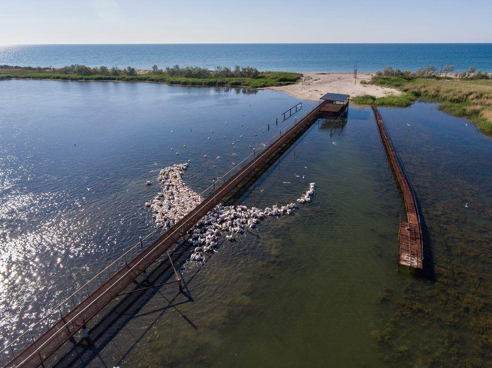 """В состав парка входят акватория группы озер Тузловские лиманы, причерноморская коса, отделяющая лиманы от Чёрного моря, приустьевые заболоченные участки рек, впадающих в озера, лесное урочище """"Лебедивка"""""""