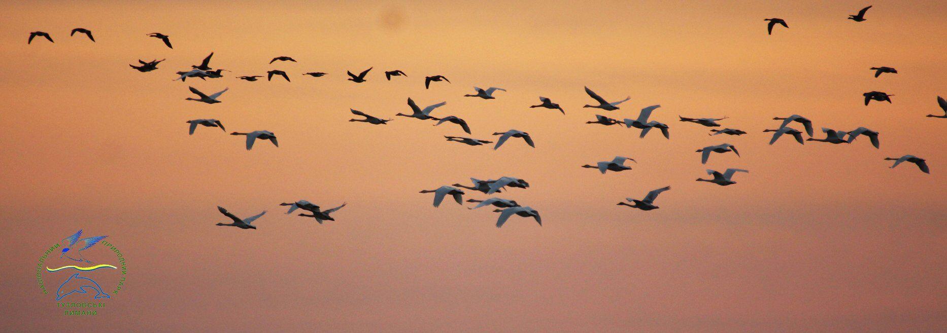 Тузловский комплекс причерноморских лиманов имеет огромное значение для поддержания биологического разнообразия не только региона, но и в мировом масштабе, поскольку служит местом гнездования, зимовки во время сезонных миграций большого количества водно-болотных птиц, а также пребывание ряда видов из Красной книги Украины и Европейского Красного списка. Вообще, эта территория играет важную роль в естественном функционировании и взаимодействия прибрежных экосистем Черного моря.