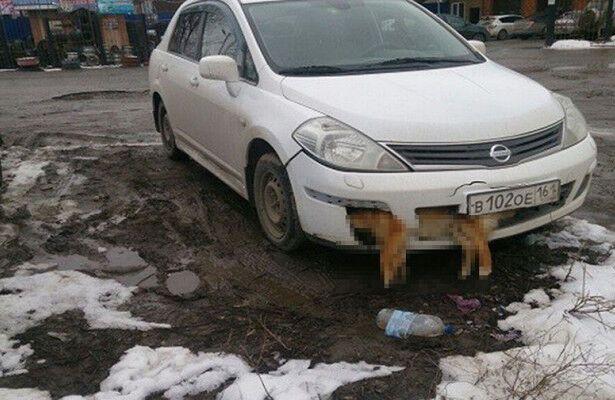Собака в бампері