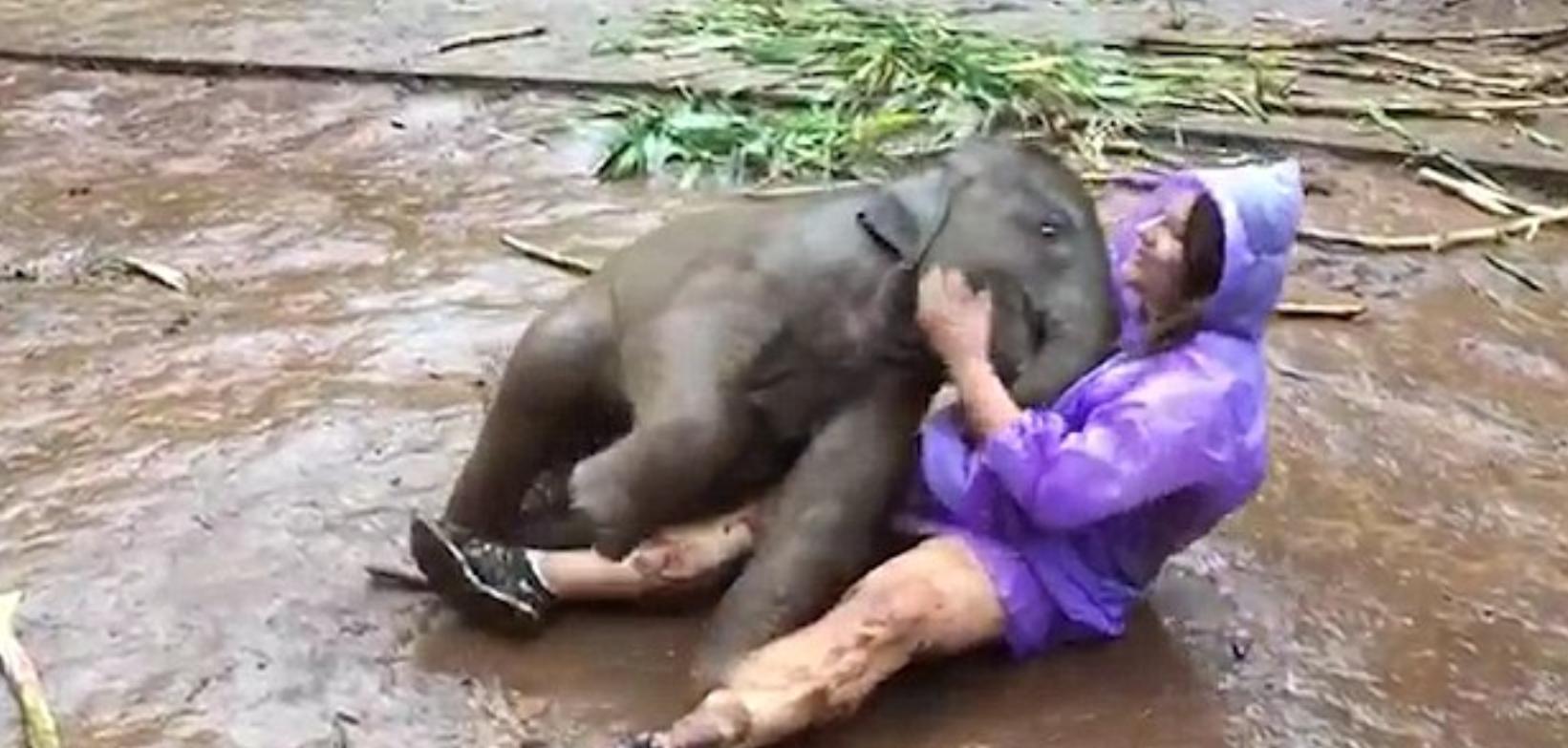 Слоненя сіло на коліна туристці