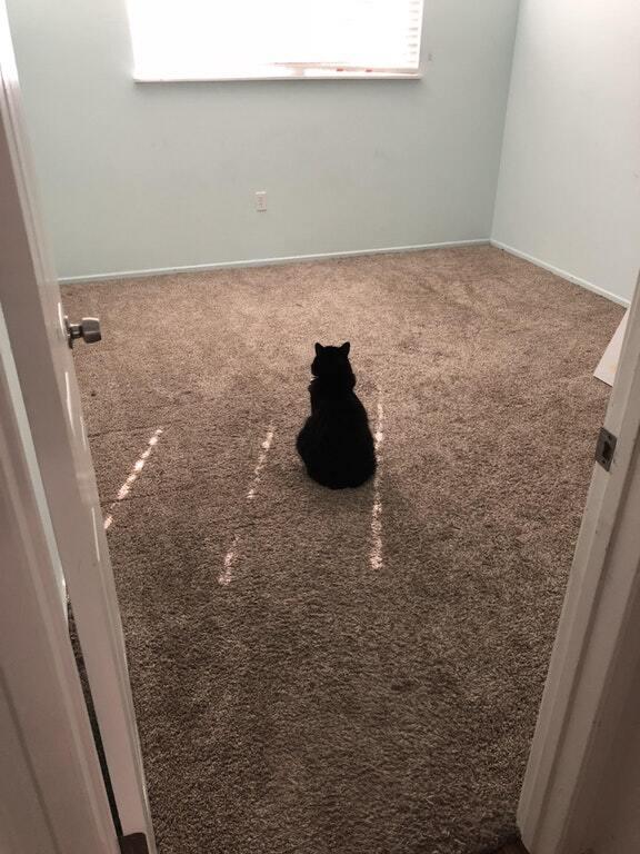 Кошка скучает