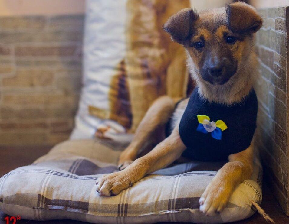 Приютить немедленно: 5 собак Днепра, которые ищут дом
