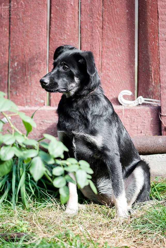 Прихистити негайно: 5 собак Дніпра, які шукають дім