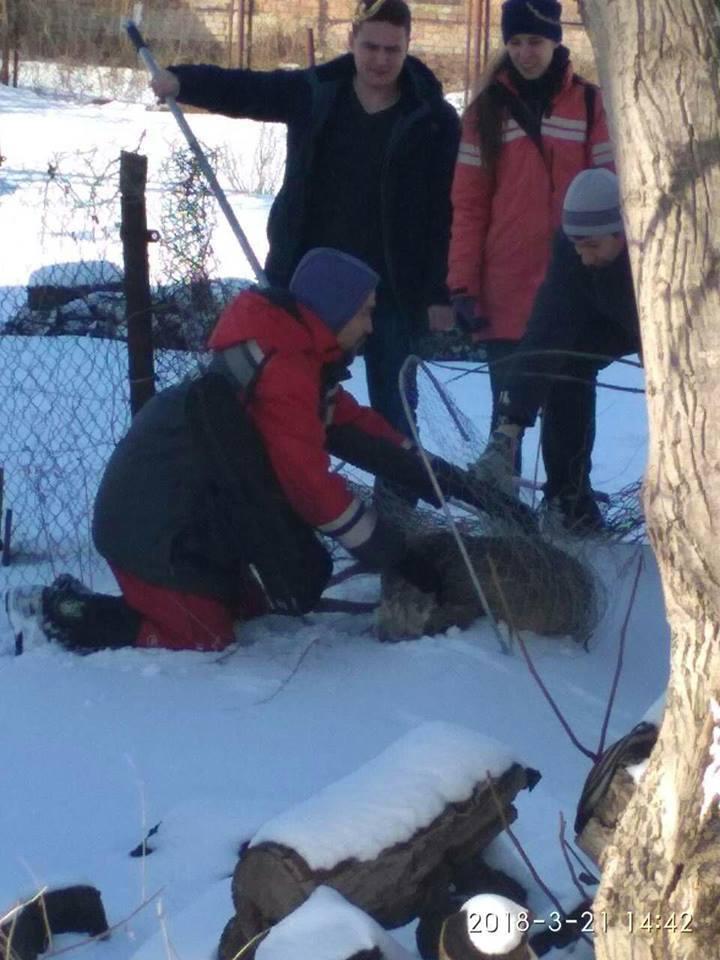 Під Києвом волонтери врятували пораненого оленя