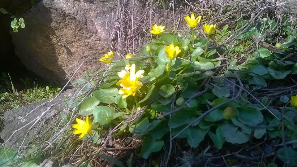 На Хортице зацвели первые цветы