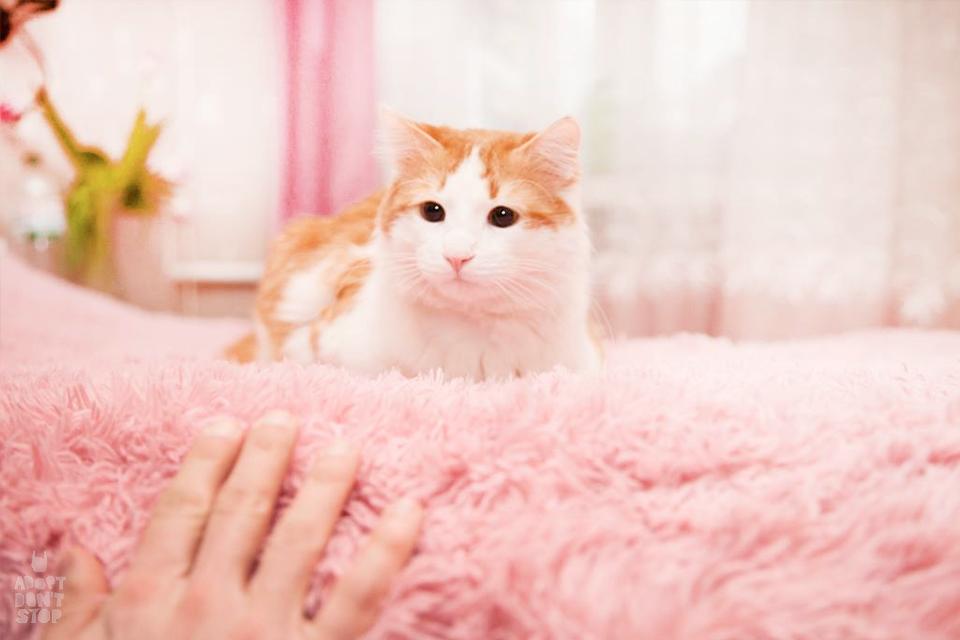Друг недели: 9 киевских котиков, которые ищут дом