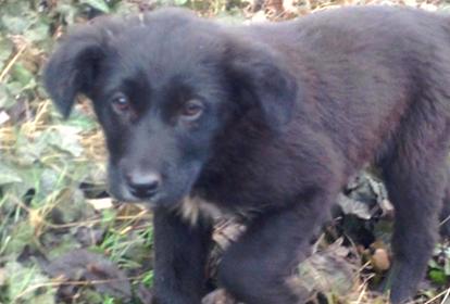 Друг тижня: 5 собак Дніпра, які шукають дім