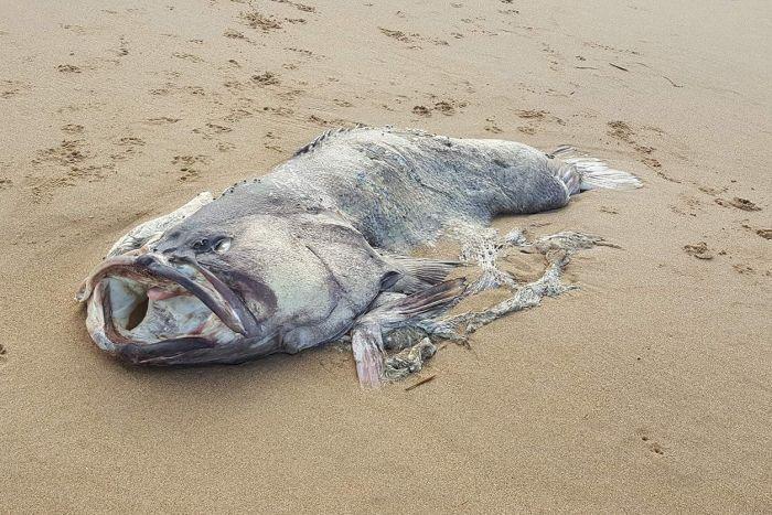 До берега Австралії прибило загадкового морського монстра: опубліковані фото