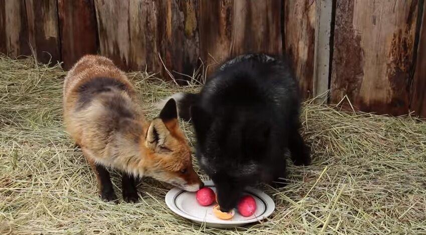 В Харькове проверили реакцию животных на крашенки