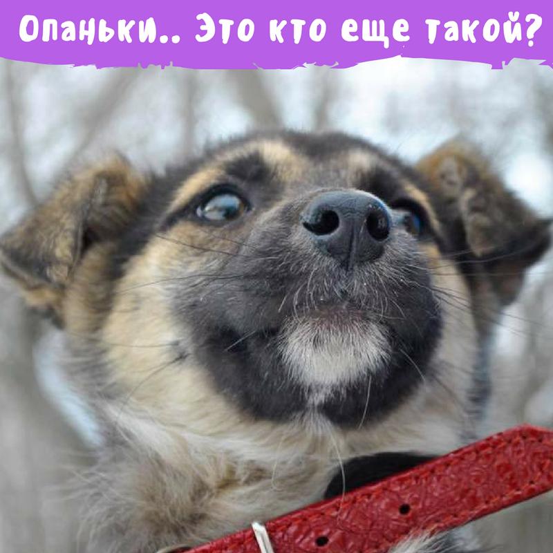 Друг недели: 7 собак Киева, которые ищут дом