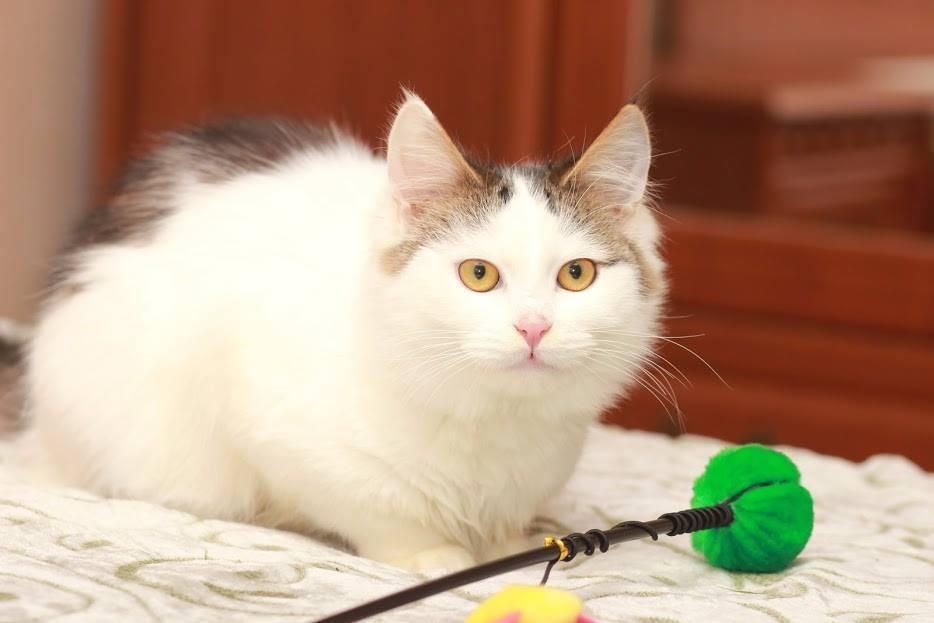 Друг недели: 5 котов и кошек Днепра, которые ищут дом